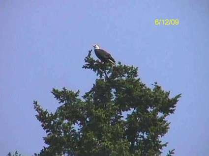 manaco-eagles-3