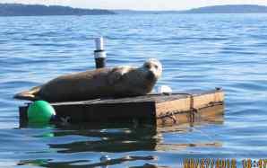 manaco-seal-raft-4