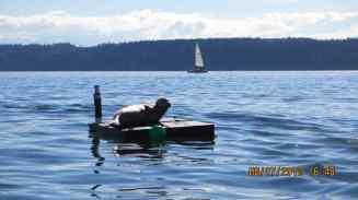 manaco-seal-raft-7